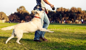 tu perro quiere que le hagas esto