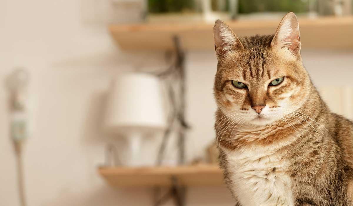 ¿Tu gato sabe cómo se llama? ¿Responde cuando lo llamas?
