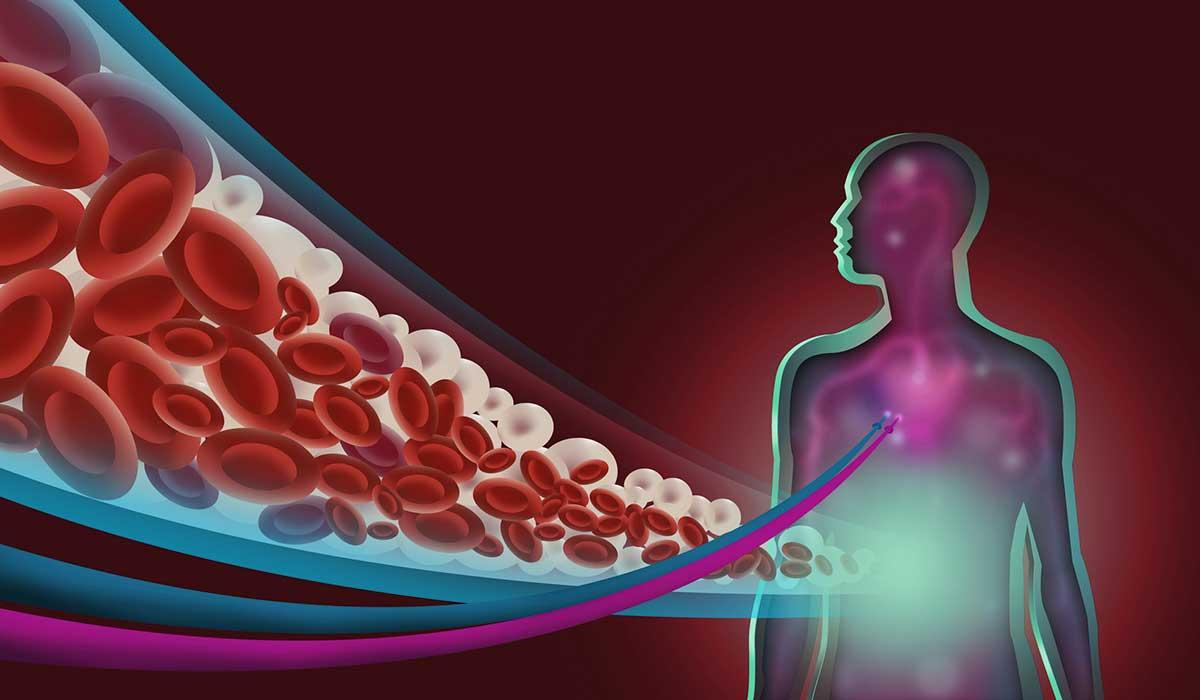¿Cuál es la diferencia entre colesterol y triglicéridos?