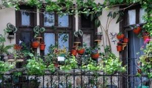 santuario de plantas en tu casa