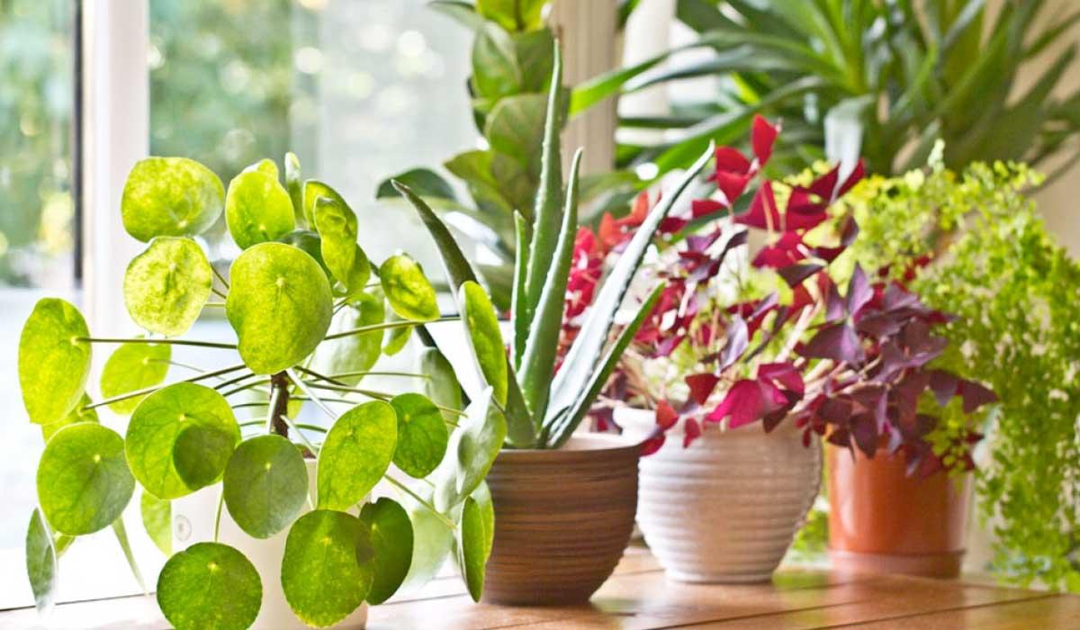 Estas plantas son una bomba de oxígeno para tu hogar