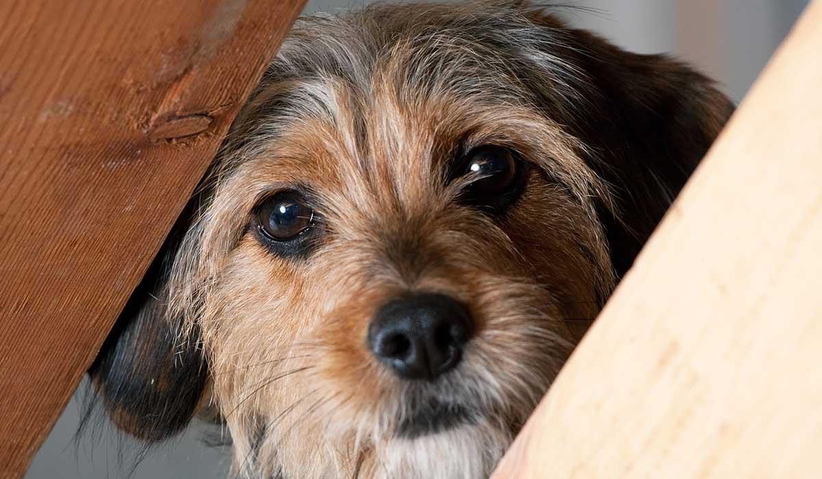 Esterilización, un aliado para la salud animal