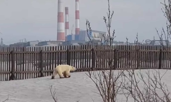 video de un oso polar afectado por el calentamiento global