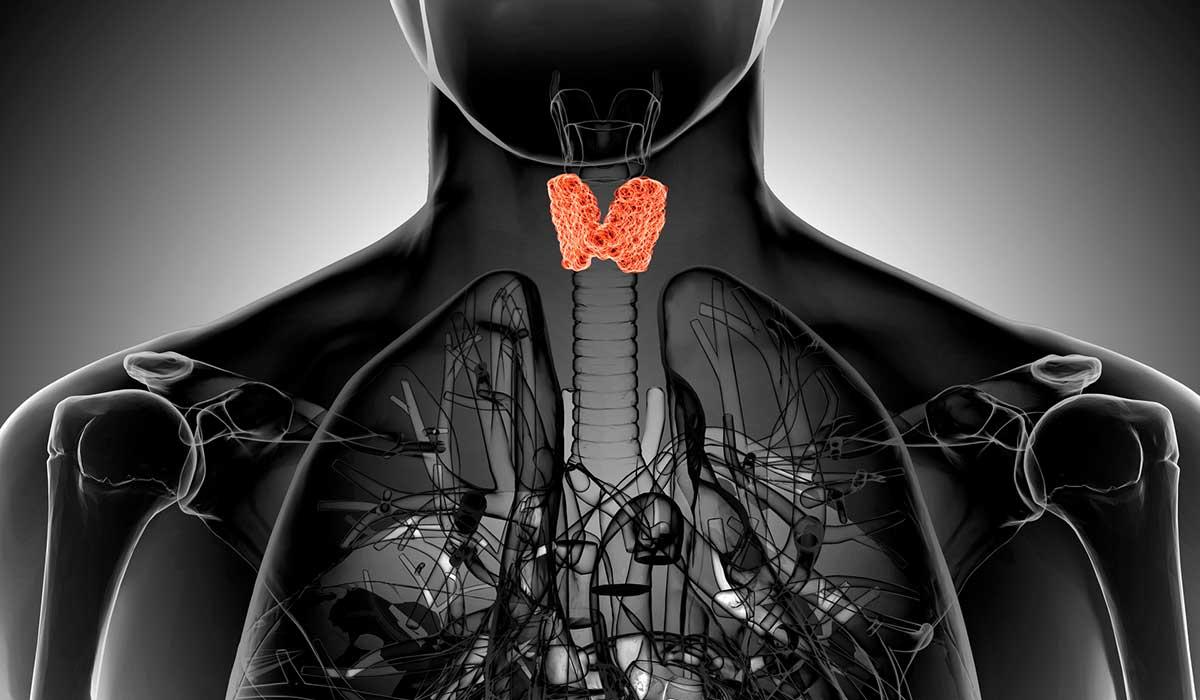¿Cómo saber si sufres problema de la tiroides?