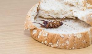 cómo terminar con los insectos en tu hogar