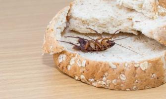 cómo terminar con los insectos en la cocina