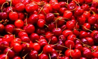 disfruta de las cerezas en su temporada