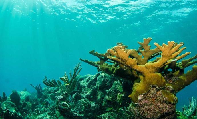 preservación de arrecifes