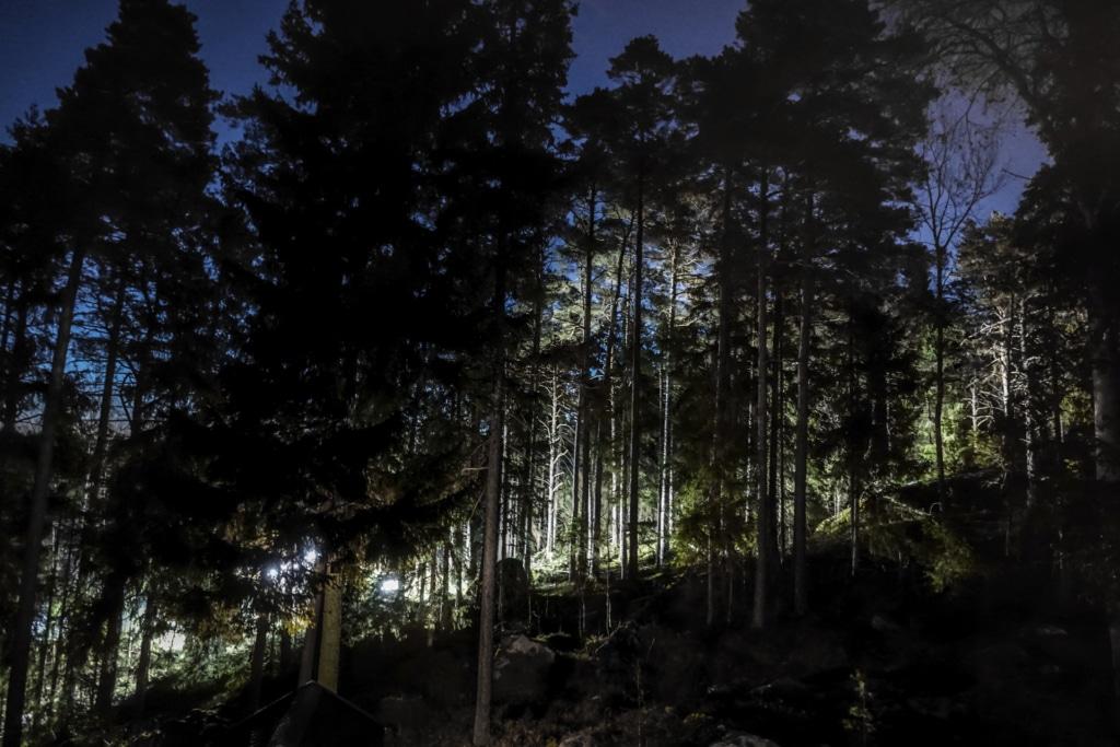 Bosque ruso.