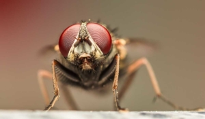 prepara este repelente contra las moscas en tu casa
