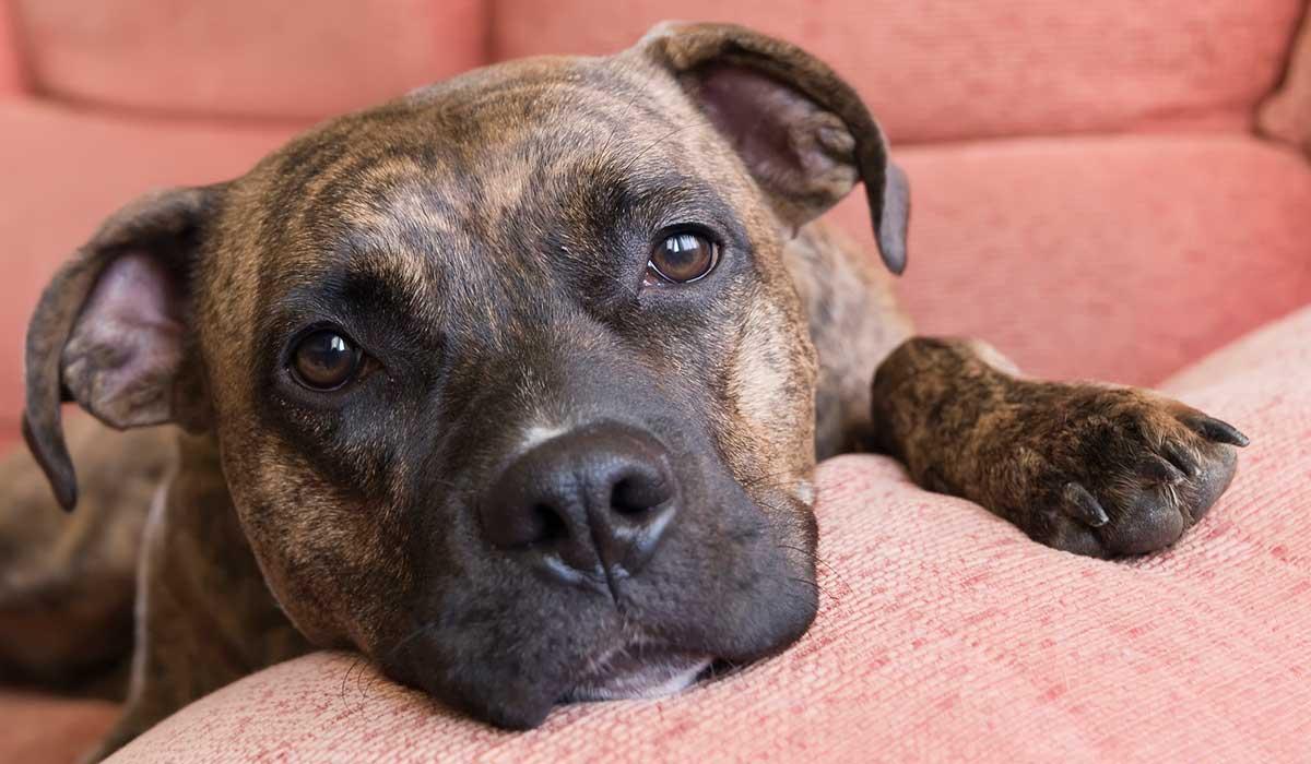 no cometas estos errores que afectan la salud de tu perro