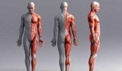 partes de tu cuerpo que son mas jóvenes que tu vida