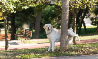 tu perro arruina tu jardín después de orinar