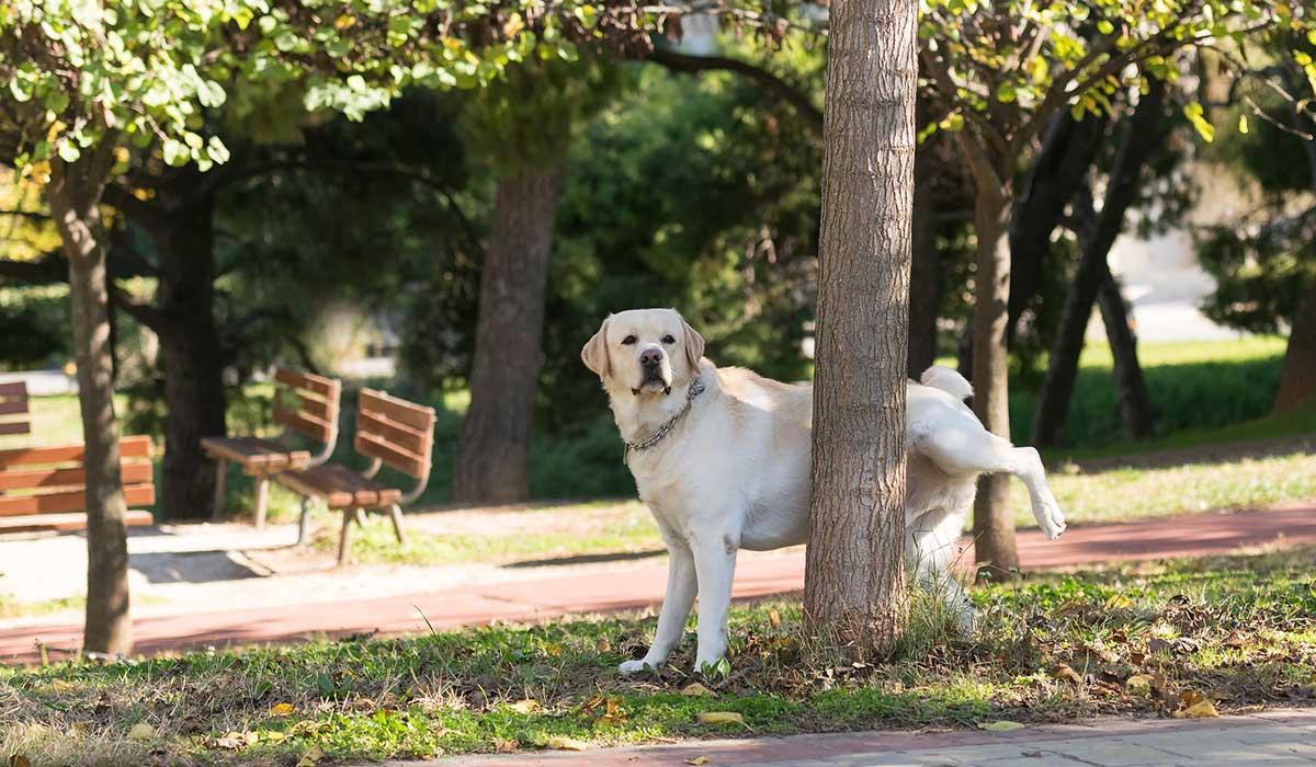 por qué rascan los perros el pasto