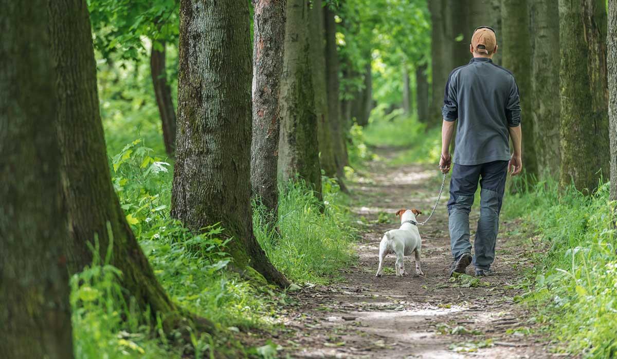 un perro te ayuda a vivir más