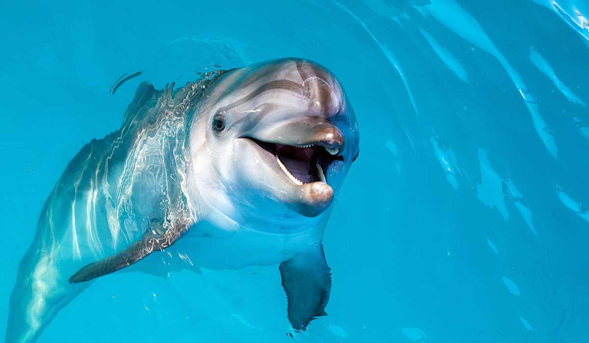 El cruel negocio del entretenimiento con delfines