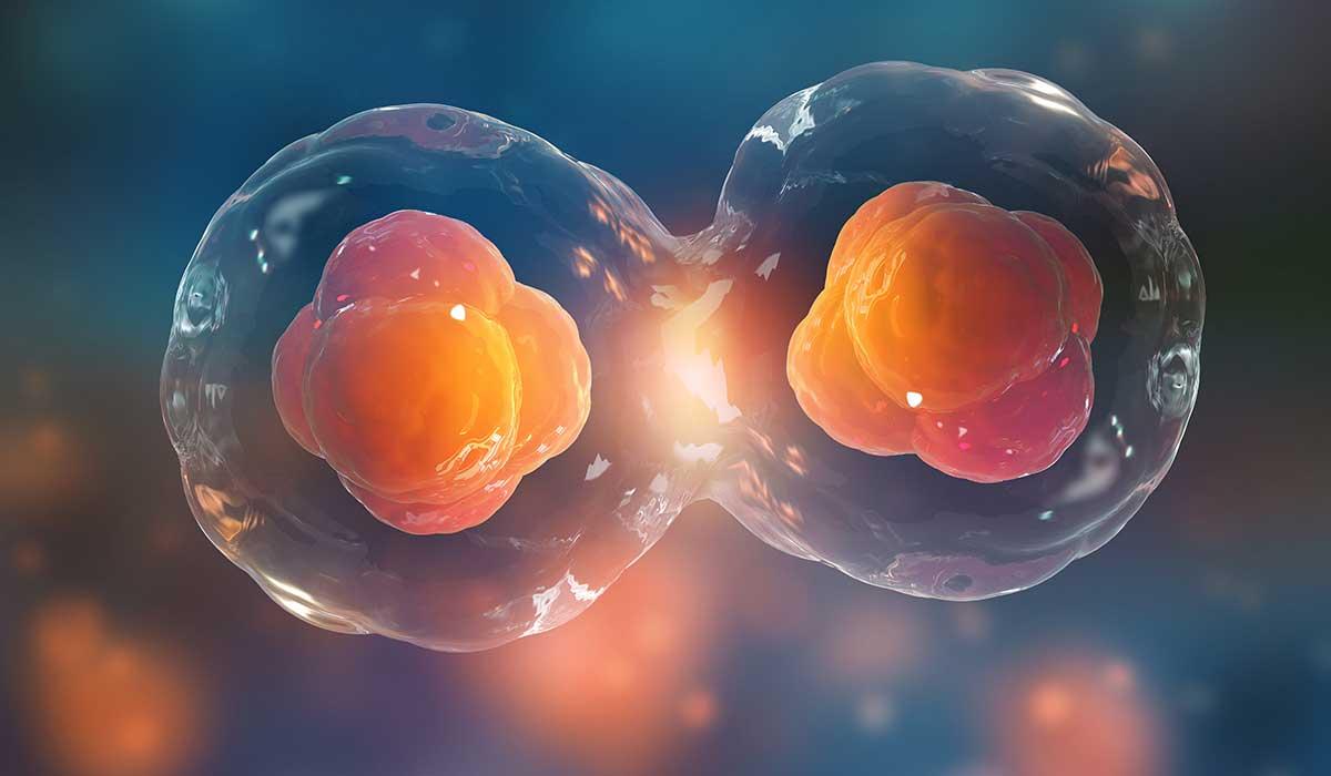 mitos de las células madre