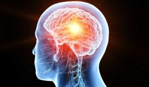 datos sorprendentes de tu cerebro