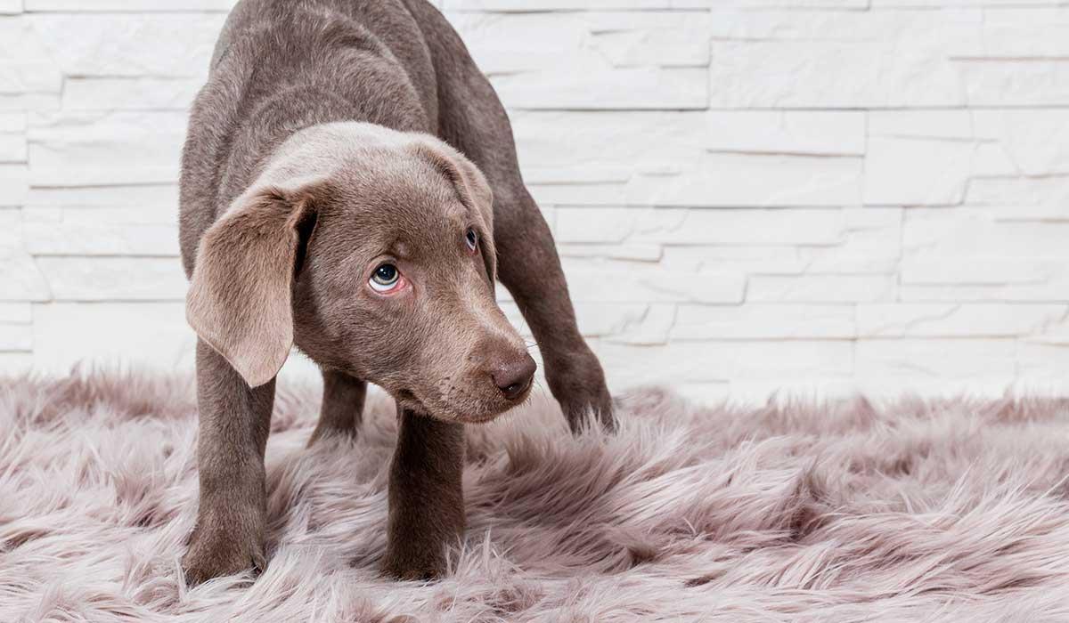 Errores que la gente comete cuando adopta a un perro