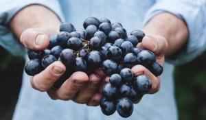 conoce lo que las uvas te dirían si pudieran