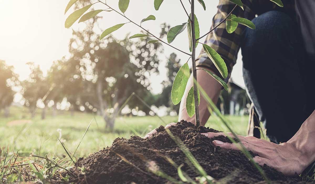 un árbol contra el cambio climático