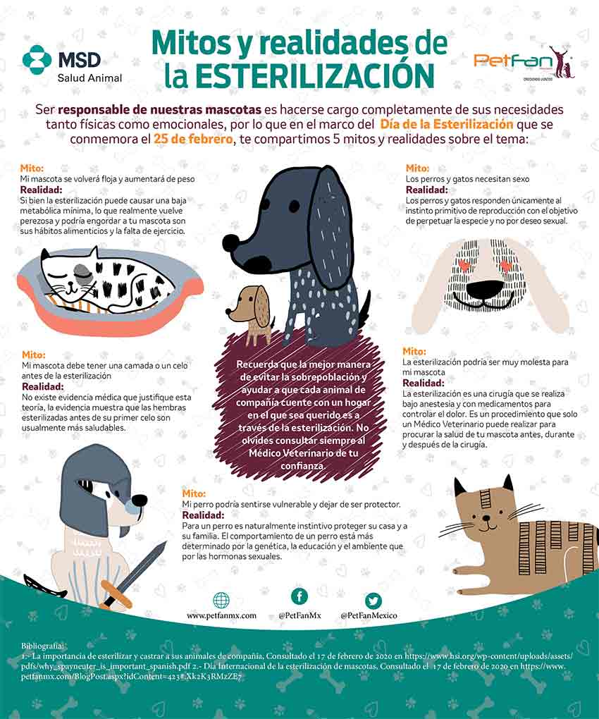 esterilizar a tus mascotas
