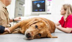 señales de cáncer en perros