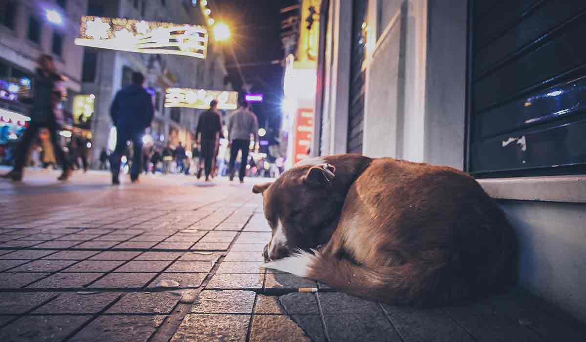 Holanda logró eliminar a los perros de la calle