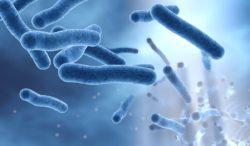 bacteria Helicobacter pylori