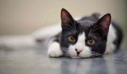 consejos para calmar a tu gato y más