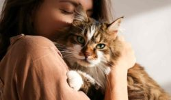 los gatos necesitan cuidados