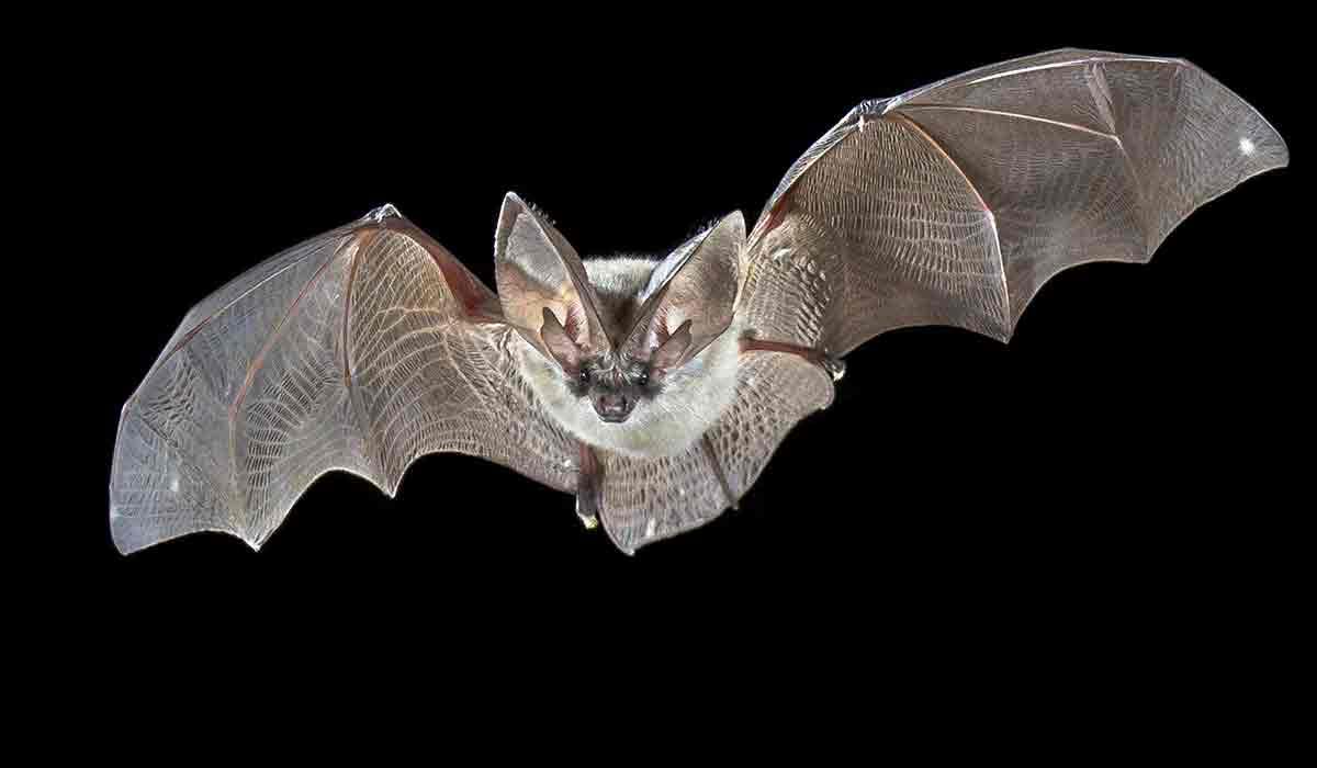 conoce lo que los murciélagos hacen por el planeta