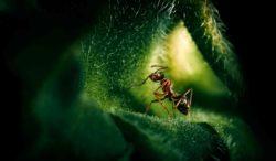 conoce la relación entre hormigas y plantas