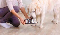 mi perro lleva días sin comer