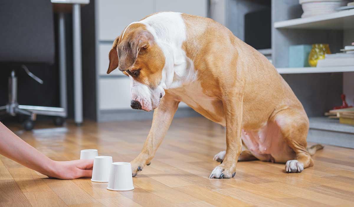 consiente a tus perros durante la cuarentena