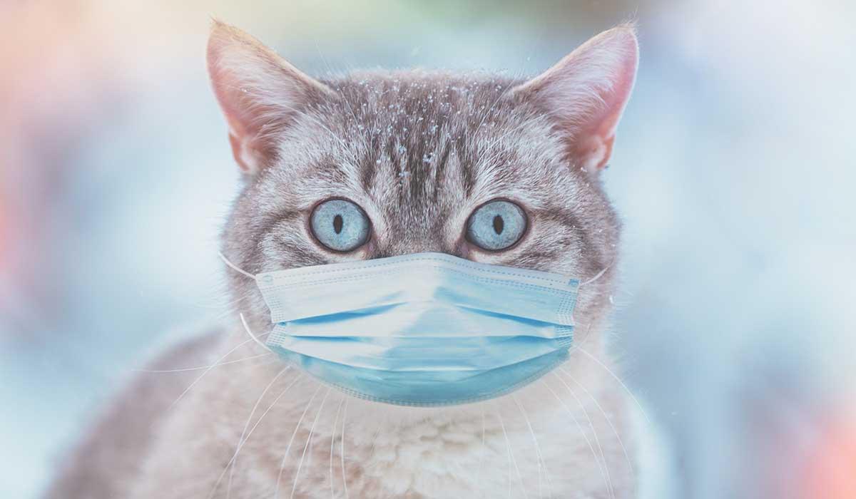 un gato no puede contagiarte de coronavirus
