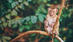 conoce las diferencias que existe entre los monos