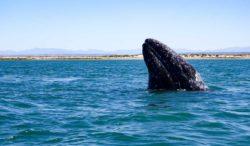 conoce Bahía Magdalena en Baja California Sur