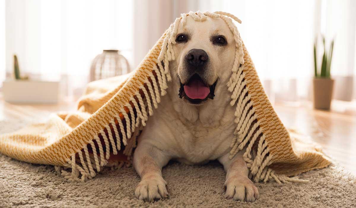 tu perro se puede ver afectado por el aislamiento