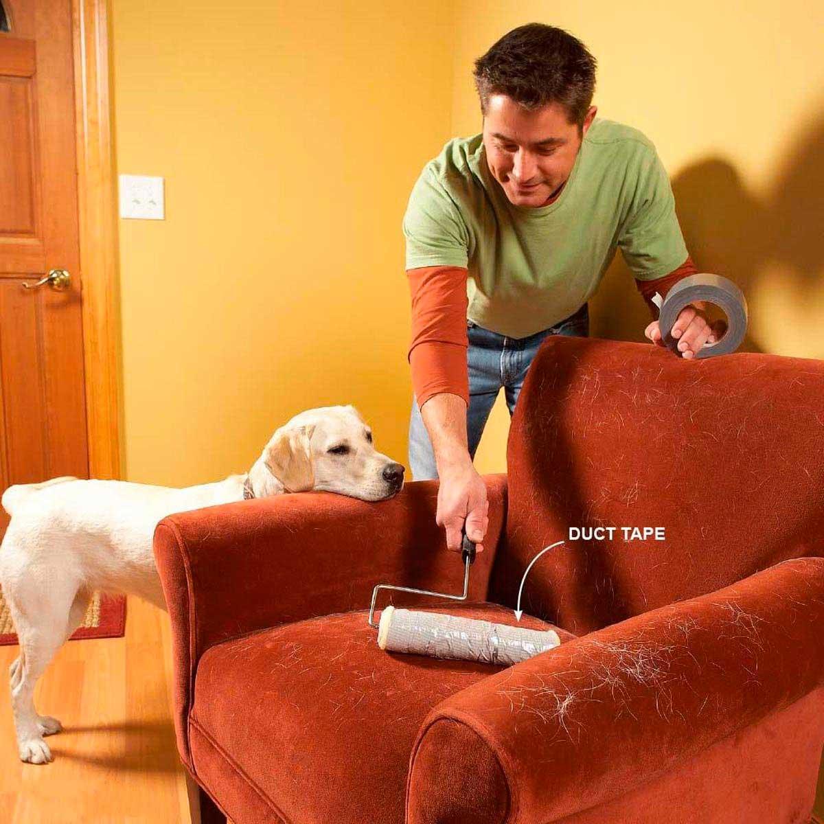 tips de limpieza con mascotas