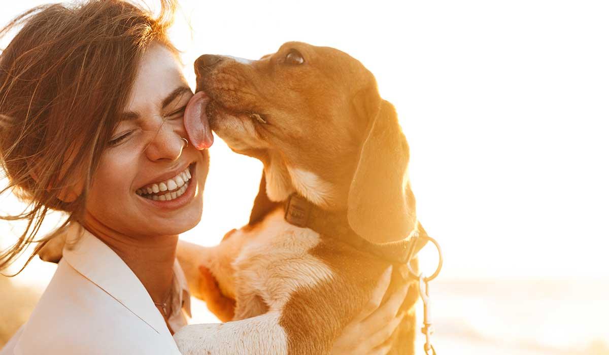 cuida el corazón de tu perro
