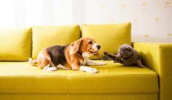 qué hace que los perros persigan a los gatos