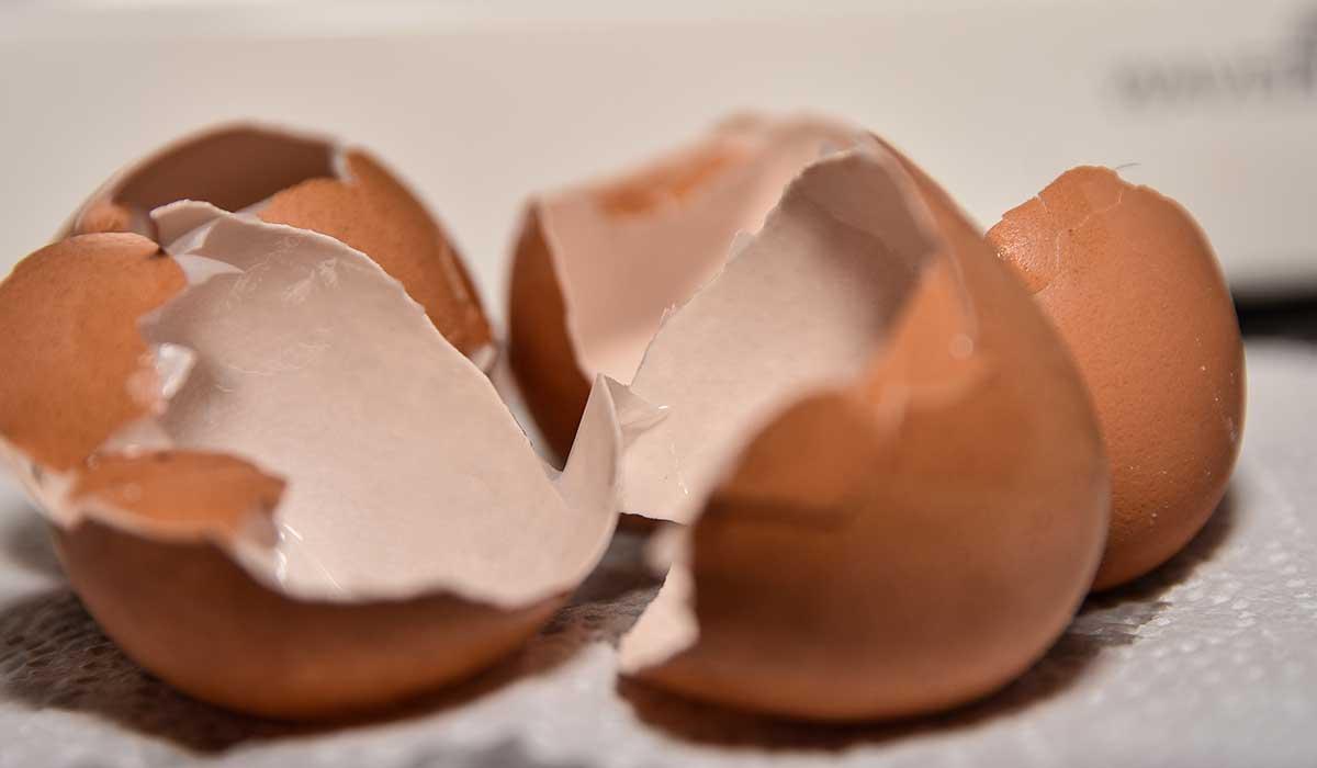 haz esto con tus cascarones de huevo