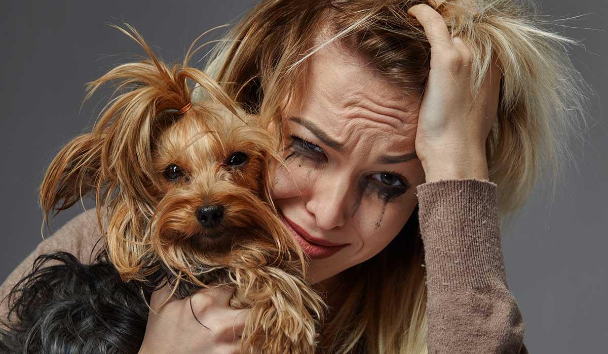 tu perro podría querer estar solo en algún momento