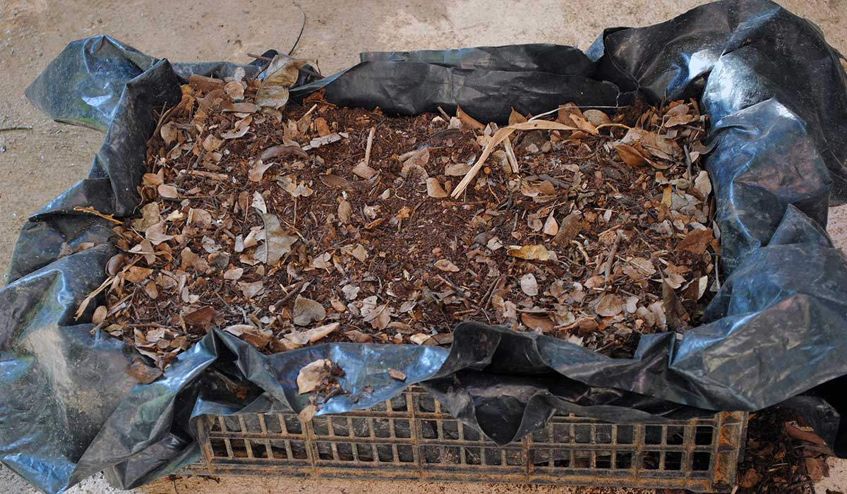 cómo usar tus desechos para hacer una composta