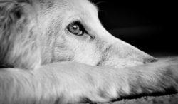 por esto puede darle miedo las tormentas a tu perro