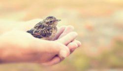 conoce a unos pájaros bebés