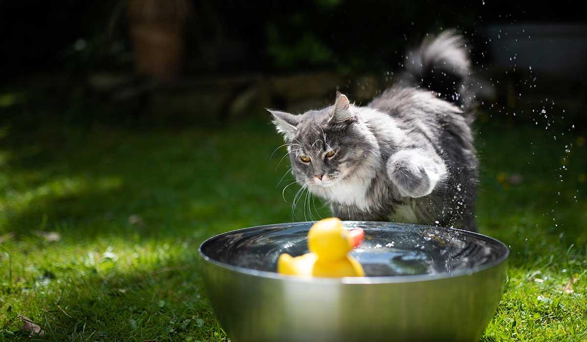 ¿los gatos odian el agua?