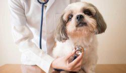cuida a tus perros de las enfermedades del corazón