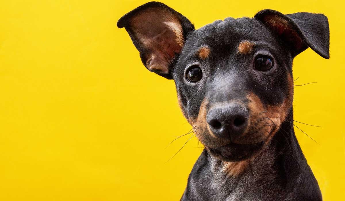 aprende más sobre los perros